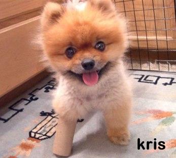 kris-puppy
