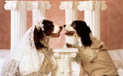 dogwedding